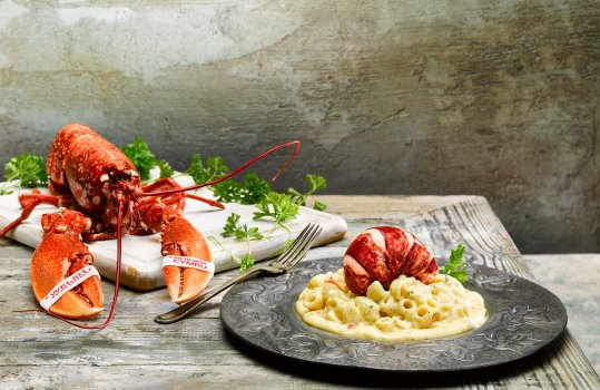 Food photograph of a Welsh lobster mac and cheese, macaroni and lobster claw meat in a thick rich sauce made with Hafod Welsh cheddar, topped with a glistening plump lobster tail and served in a metal dish on a grey background with a whole lobster